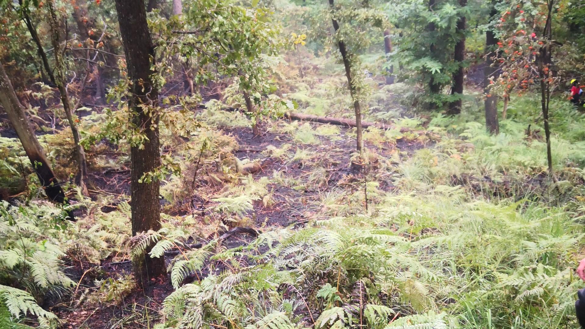 Gozdni požar nad tunelom Šentvid